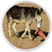 Burro Playing With Safety Cone Round Beach Towel