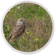Burrowing Owl And Flowers Round Beach Towel
