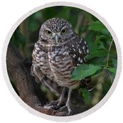 Burrowing Owl Color Version Round Beach Towel