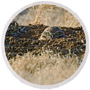 Burrowing Owl Peaking Outta The Hole  Round Beach Towel
