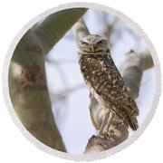 Burrowing Owl Perched On A Branch  Round Beach Towel