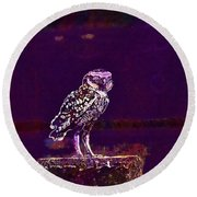 Burrowing Owl Small Owl Bird Nature  Round Beach Towel