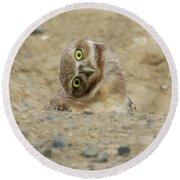 Burrowing Owl Tilted Head Round Beach Towel