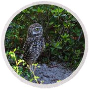 Burrowing Owls At Guard Round Beach Towel