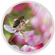 Busy Bee On A Crabapple Tree Round Beach Towel