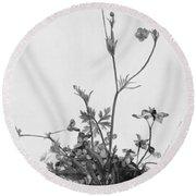 Butter Cups Red Clover And Plantain 1526 Round Beach Towel