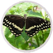 Butterflies Live - 8 Round Beach Towel