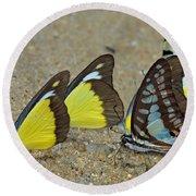 Butterflies Puddling Round Beach Towel
