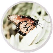 Butterfly 05 Round Beach Towel