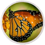 Butterfly 29 Round Beach Towel