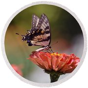 Butterfly And Orange Zinnia Round Beach Towel