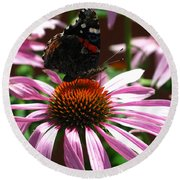 Butterfly And Pink Cone Flower Round Beach Towel