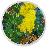 Butterfly At Cape May Nj Round Beach Towel