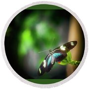 Butterfly At Cleveland Botanical Gardens Round Beach Towel