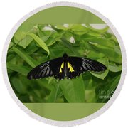 Butterfly Black And Yellow Round Beach Towel