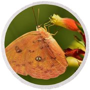 Butterfly Delight Round Beach Towel
