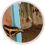 Butterfly Drying His New Wings Round Beach Towel