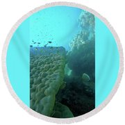 Butterfly Fish  Round Beach Towel