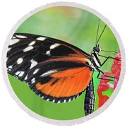Butterfly  Golden Helicon Round Beach Towel