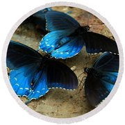 Butterfly Huddle At The Puddle Round Beach Towel