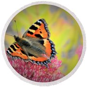 Butterfly In Bloom Round Beach Towel