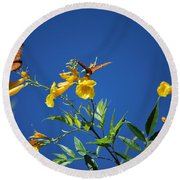 Butterfly In The Sonoran Desert Musuem Round Beach Towel