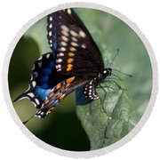 Butterfly Laying Eggs Round Beach Towel