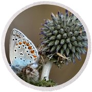 butterfly on a Echinops adenocaulon Round Beach Towel