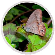 Butterfly On Geranium Leaf Round Beach Towel