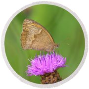 Butterfly On Knapweed Round Beach Towel
