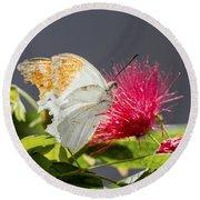 Butterfly On Magenta Flower Round Beach Towel