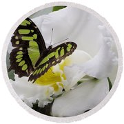 Butterfly On Orchid Round Beach Towel