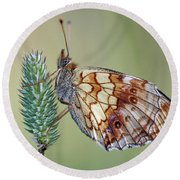 Butterfly On The Grass Round Beach Towel