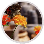 Butterfly On Yellow Flower Round Beach Towel