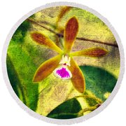 Butterfly Orchid - Encyclia Tampensis Round Beach Towel