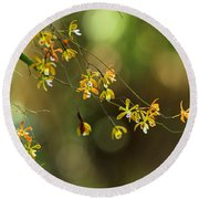 Butterfly Orchid Round Beach Towel