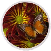 Butterfly Resting On Chrysanthemums Round Beach Towel