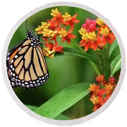 Butterfly Resting On Flower Round Beach Towel