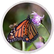 Butterfly - The Monarch  Round Beach Towel