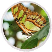 Butterfly Watching Round Beach Towel