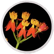 Butterfly Weed Round Beach Towel