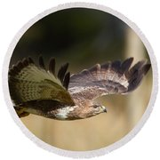 Buzzard In Flight Round Beach Towel