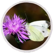 Cabbage Butterflies On Spotted Knapweed Round Beach Towel