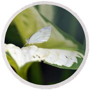 Cabbage Butterfly Round Beach Towel