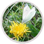Cabbage White Butterfly  Round Beach Towel
