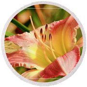 Cabbage White Butterfly On Day Lily Round Beach Towel