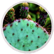 Cacti And Friends Round Beach Towel