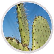 Cactus Against Blue Sky Round Beach Towel