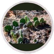 Cactus, Arches National Park Round Beach Towel