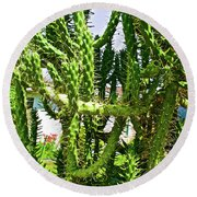 Cactus At Pilgrim Place In Claremont-california  Round Beach Towel